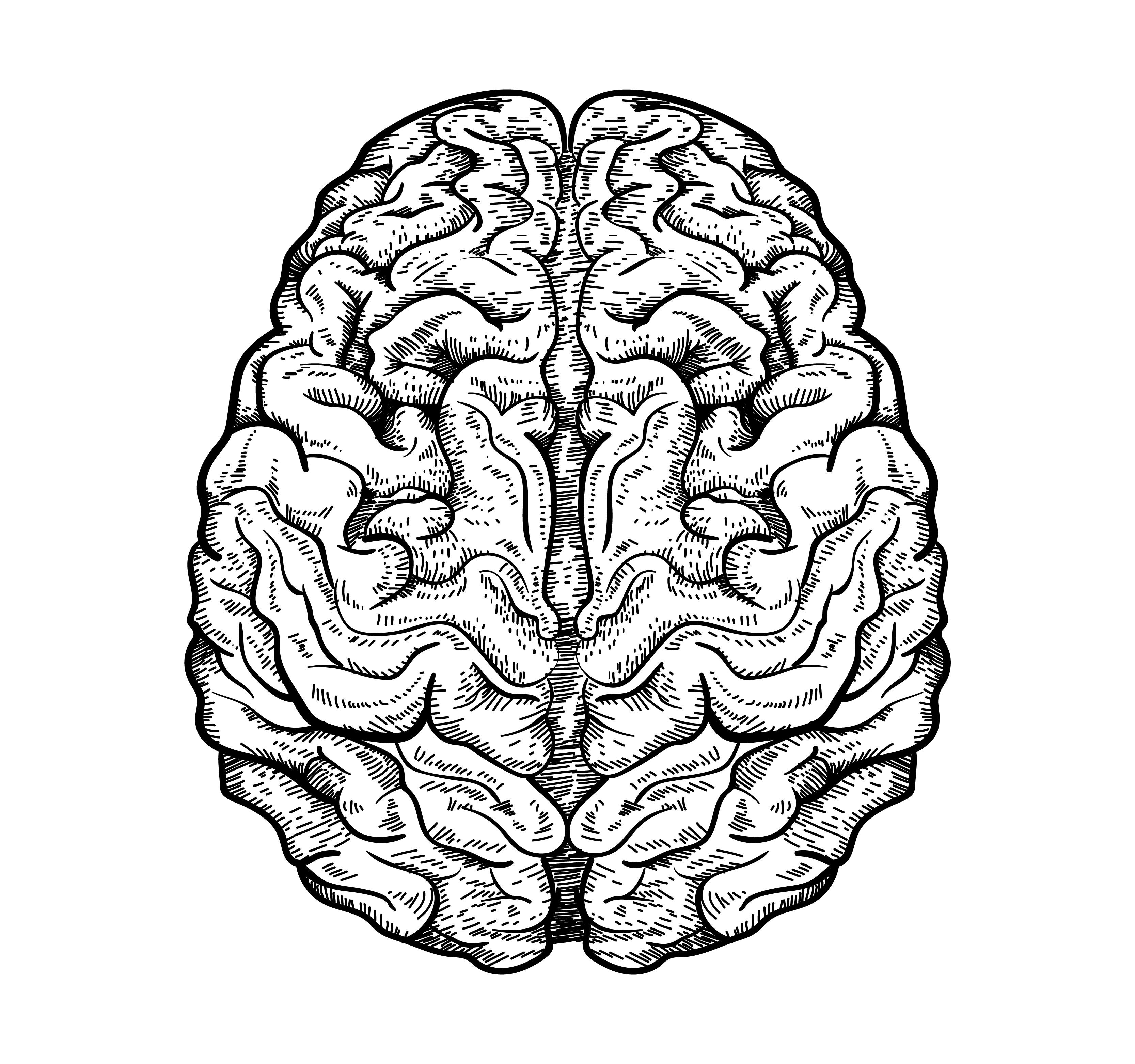 brain002HQ-01.jpg