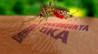 zika-virus-mosquitos